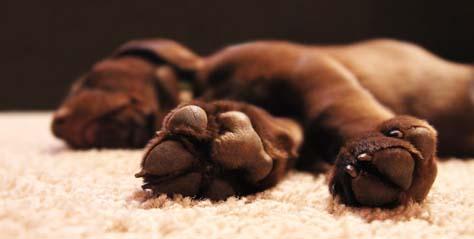 Las alfombras y los perros