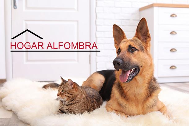 Hogar Alfombra, tienda de alfombras